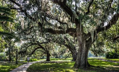 mossy-trees-runner-1