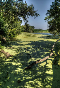 green-algae-swamp-1