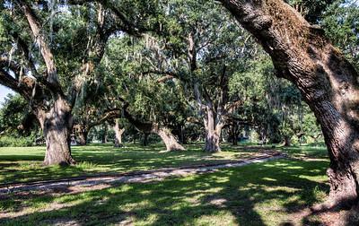 park-oak-trees-1