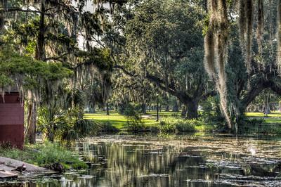 bayou-moss-trees-2