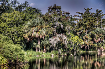 bayou-swamp-trees-2-1