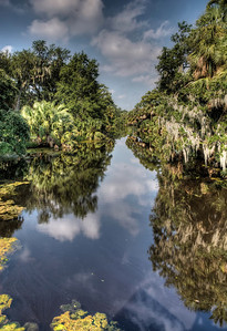bayou-swamp-3-1