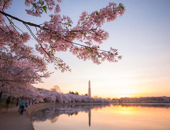 Spring in DC