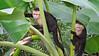 Capuchins 11-18-12