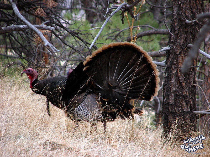 03-16_turkey