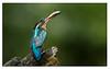 58. 3 species............