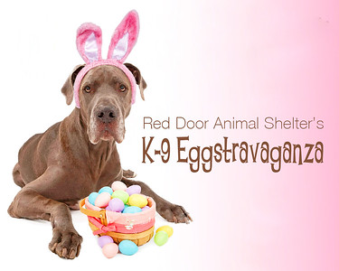 K9 Egg Hunt Photos