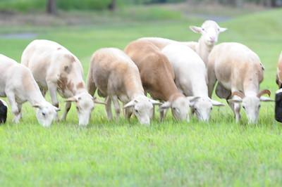 21st Century Cattle Drive?