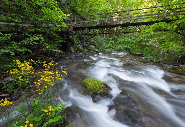 Creek Wildflowers