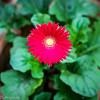 20140815Backyard Flora0002