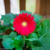 20140815Backyard Flora0006