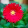 20140815Backyard Flora0008