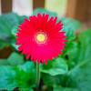 20140815Backyard Flora0004