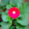 20140815Backyard Flora0003