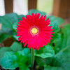 20140815Backyard Flora0005
