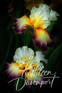 Twin Iris