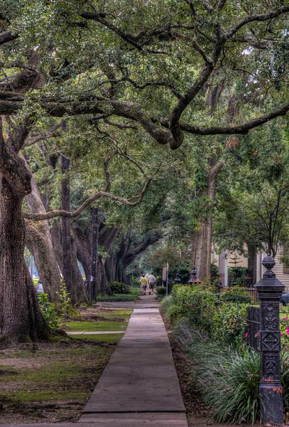 sidewalk-trees-2