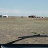 Camel herder family camp.