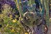 old cactus-1