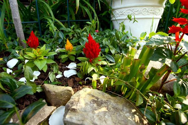 5-30-13<br /> Kathy Thompson garden at 500 W. Mulberry.<br /> KT photo | Tim Bath