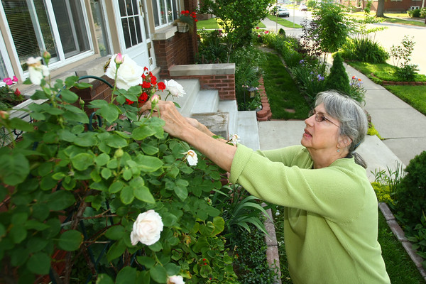5-30-13<br /> Kathy Thompson garden at 500 W. Mulberry.<br /> KT photo   Tim Bath