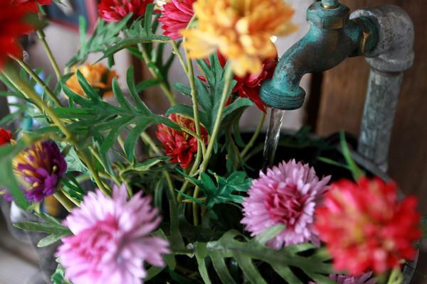 7-26-13<br /> Kathy Jernagan's garden<br /> <br /> KT photo | Kelly Lafferty