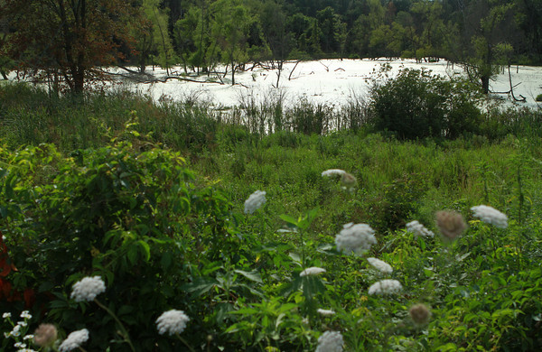7-23-13<br /> Nickel Plate trail<br /> Swamp-like lands near the Nickel Plate trail.<br /> KT photo   Kelly Lafferty