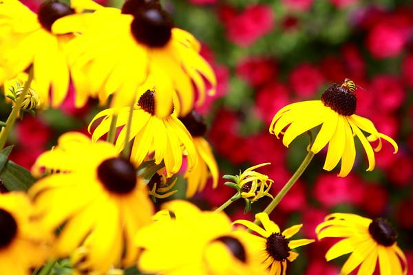 7-26-13<br /> Kathy Jernagan's garden<br /> <br /> KT photo   Kelly Lafferty