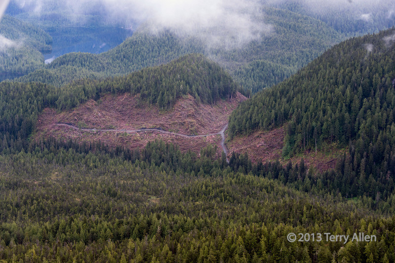 Logging road and clear cut above Grenville Channel, south of Prince Rupert, British Columbia