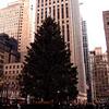 Rockefeller Center Christmas Tree, Jan 2011