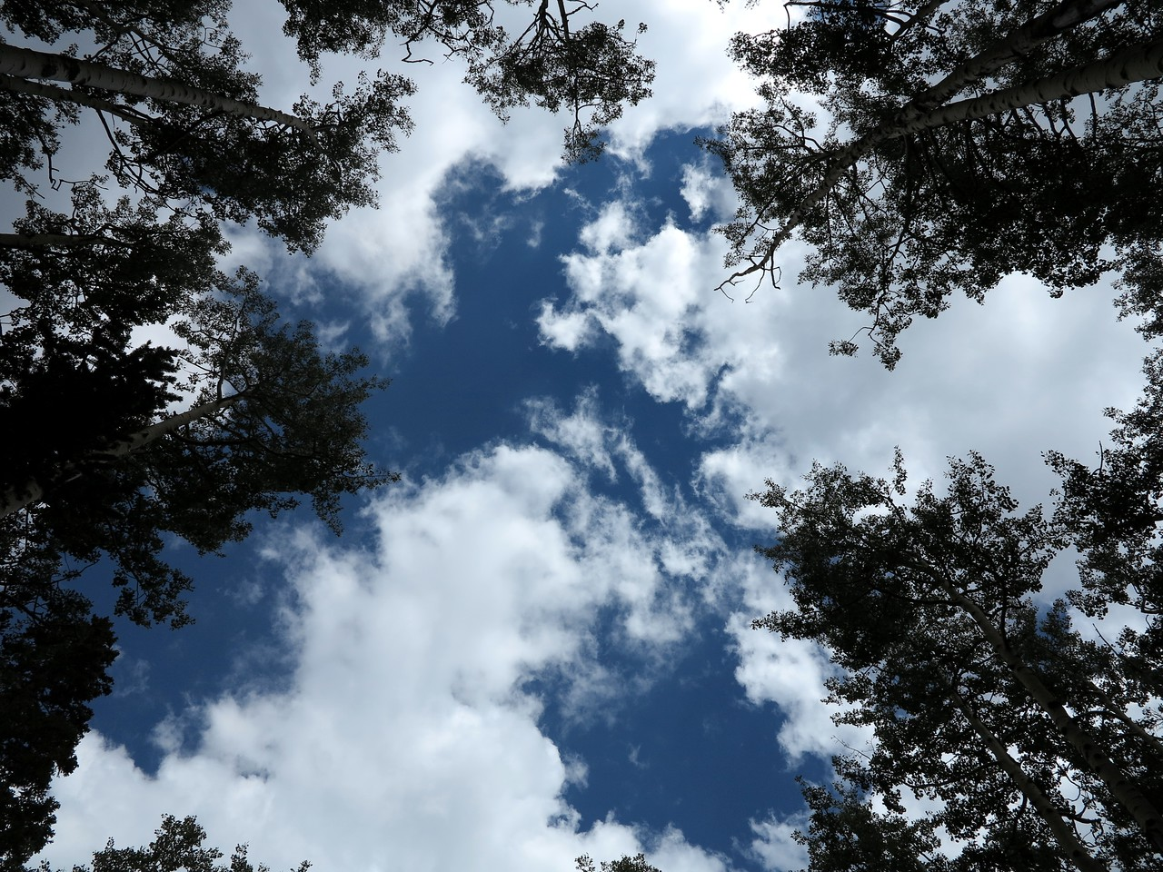 Looking straight up through the Aspens where the aircraft descended. It is unknown from what altitude the pilot lost control of the aircraft. <br /> <br /> The accident investigation confirmed that the aircraft contacted no trees or branches in its fall.