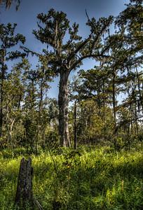 bayou-trees-4-1