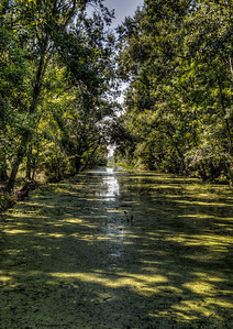 bayou-swamp-5-2
