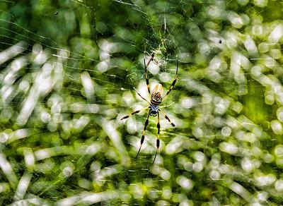 bayou-spider-1
