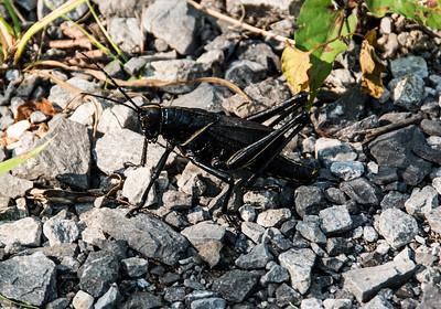 bayou-cricket-1