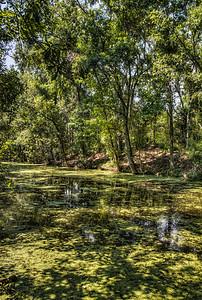 bayou-swamp-algae-1