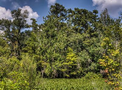 bayou-trees-4