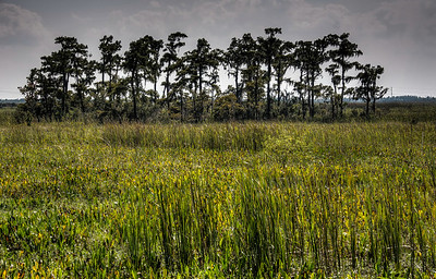bayou-swamp-8-1