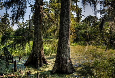 cypress-tree-swamp-1