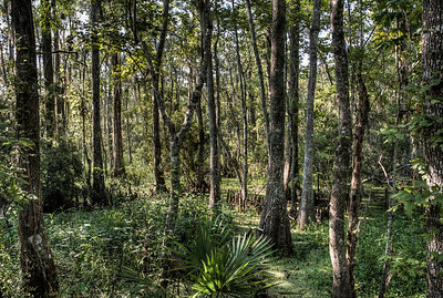 bayou-swamp-forest-1