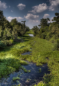 bayou-swamp-7-1