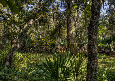 bayou-swamp-6-2