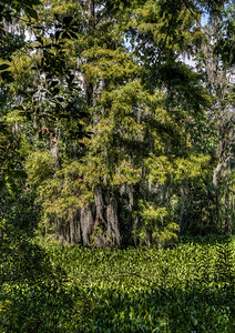 bayou-trees-2-1