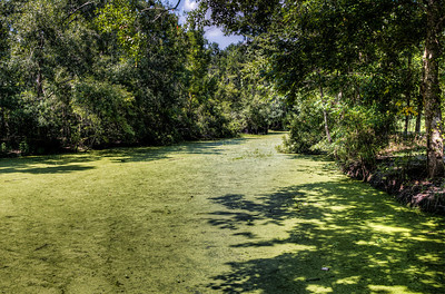 green-algae-river-1