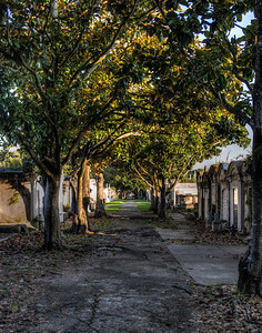 cemetery-path-trees-12