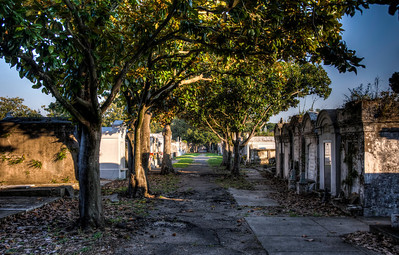 cemetery-path-trees-2-13