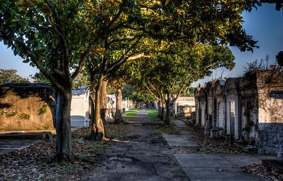 cemetery-path-trees-2-13