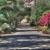 colorful country lanes of Del Dios in escondid california