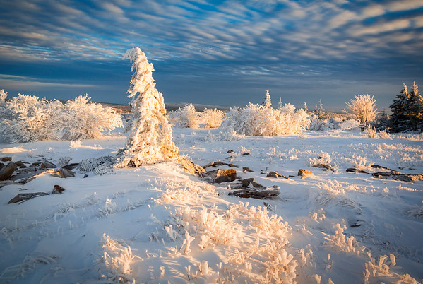 Late Day Light in Dolly Sods. Dolly Sods Wilderness, December 2012.<br /> <br /> © Martin Radigan. All images copyright protected.