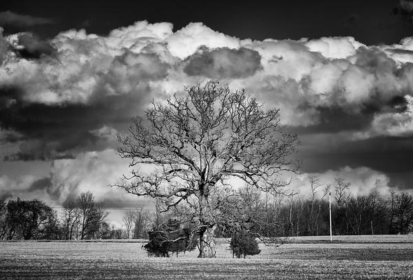The Poolesville Tree